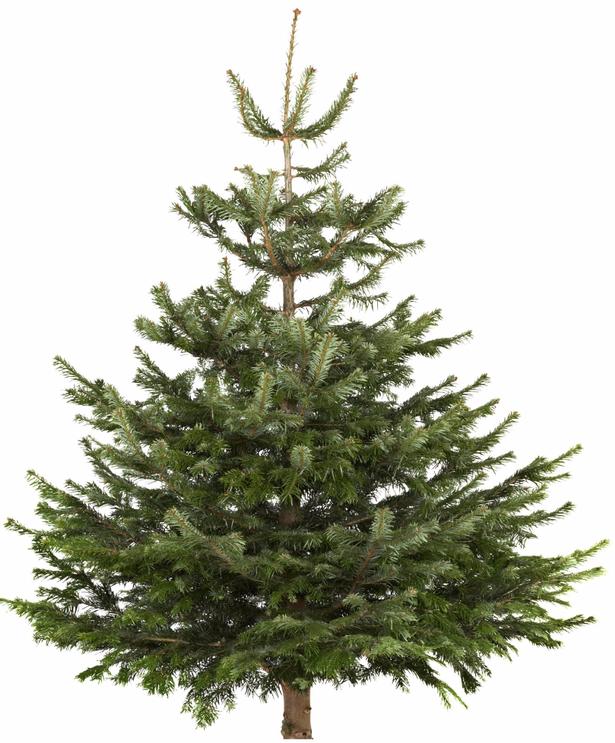 Paide linnavalitsus otsib jõulukuuske!