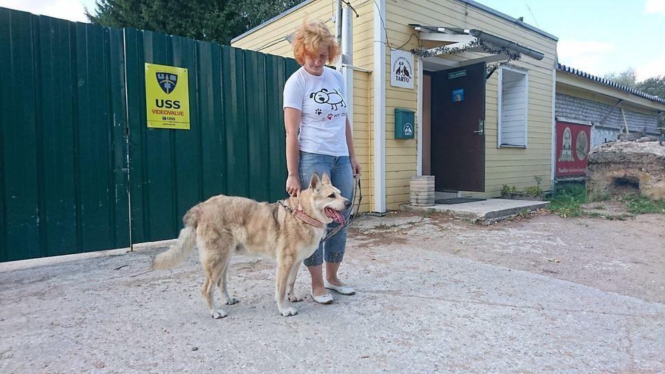 Tartu kavandab koduta loomade varjupaiga renoveerimist
